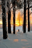 Ice-Covered Trees at Sunset Photographic Print by Lola Akinmade Akerstrom