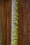 Close Up of a Bright Green Growth on a Tree Trunk Photographic Print by Stacy Gold