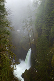 A Greenish Waterfall in a Misty Evergreen Forest Photographic Print by Jed Weingarten