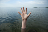 A Hand Reaching Out of Leech Lake in Walker, Minnesota Photographic Print by Joel Sartore
