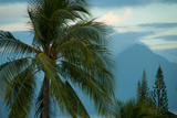 Palm Trees in Bora Bora Photographic Print by Karen Kasmauski