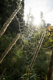 Sunburst Behind a Dew Covered Spider Web in Alaska Photographic Print by Jonathan Kingston
