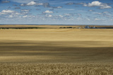 A Wheat Field in South Dakota Photographic Print by Jim Richardson