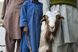 A Shepherd's Children Help to Look after the Goats Photographic Print by Alex Treadway