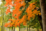 Trees with Autumn Foliage by the Concord River Photographic Print by Darlyne A. Murawski
