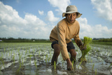 A Farmer Plants Rice in Bali Fotografiskt tryck av Jim Richardson