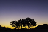 A Cluster of Silhouetted Trees at Sunset Photographic Print by Jonathan Irish
