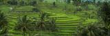 The Jatiluwih Rice Terraces Fotografisk trykk av Jim Richardson