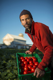 A Tomato Farmer on His Farm in Wisconsin Photographie par Jim Richardson