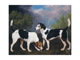 A Couple of Foxhounds Giclee Print by George Stubbs