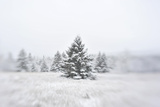 A Snow Covered Evergreen Trees Photographic Print by Raul Touzon