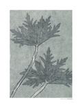 Geranium Himalayense Giclee Print by Pernille Folcarelli