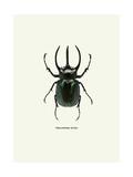 Beetle Black Giclee Print