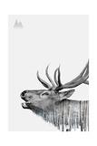 Deer Giclee Print by  PhotoINC