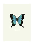 Blue Butterfly Giclée-tryk