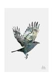Crow Giclée-tryk