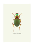 Beetle Green Prints