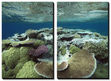 Great Barrier Reef Near Port Douglas, Queensland, Australia Poster by Flip Nicklin/Minden Pictures