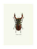 Beetle Red Giclee Print