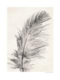 Feather Impression giclée par Pernille Folcarelli