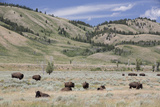 American Bison (Bison Bison) Photographic Print by Richard Maschmeyer