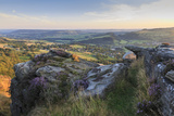 Purple Heather on Curbar Edge Photographic Print by Eleanor Scriven