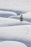 Lone Evergreen Tree in the Snow with a Meandering Stream Photographic Print by James Hager