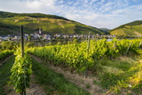 Vineyard Above Zell, Moselle Valley, Rhineland-Palatinate, Germany, Europe Photographic Print by Michael Runkel