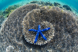 Hard and Soft Corals and Sea Star Underwater on Sebayur Island Photographic Print by Michael Nolan