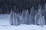 Frost-Covered Evergreen Trees Photographic Print by James Hager