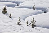 Evergreen Trees in the Snow with a Meandering Stream Photographic Print by James Hager