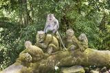 Sacred Monkey Forest, Ubud, Bali, Indonesia, Southeast Asia, Asia Fotografisk trykk av G &