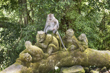 Sacred Monkey Forest, Ubud, Bali, Indonesia, Southeast Asia, Asia Photographic Print by G &