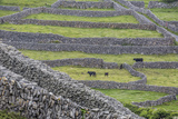 Rock Walls Create Small Paddocks for Sheep and Cattle on Inisheer Lámina fotográfica por Michael Nolan
