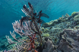 Hard and Soft Corals and Crinoid Underwater on Sebayur Island Photographic Print by Michael Nolan