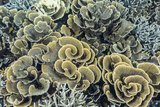 A Profusion of Hard and Soft Coral Underwater on Siaba Kecil Photographic Print by Michael Nolan