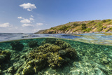 Underwater Reef System of the Marine Reserve on Moya Island, Nusa Tenggara Province, Indonesia Photographic Print by Michael Nolan