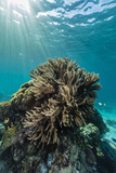 A Profusion of Hard and Soft Coral Underwater on Tengah Besar Island Photographic Print by Michael Nolan