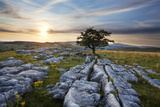 Lone Tree and Limestone Pavement at Sunset, Settle, Yorkshire, England, United Kingdom, Europe Photographic Print by Mark Sunderland