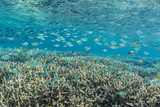 Hard and Soft Corals and Reef Fish Underwater on Sebayur Island Photographic Print by Michael Nolan