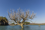 Extreme High Tide Covers Trees in the Hunter River, Kimberley, Western Australia Photographic Print by Michael Nolan