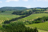 Vineyards and Cypress Trees, Chianti Region, Tuscany, Italy, Europe Photographic Print by Peter Groenendijk