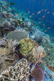 A Profusion of Coral and Reef Fish on Batu Bolong, Komodo Island National Park, Indonesia Photographic Print by Michael Nolan