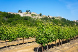 Menerbes and Vines, Luberon, Provence, France, Europe Photographic Print by Peter Groenendijk