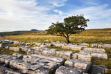 Lone Tree at Wilskill Stones with Pen Y Ghent Beyond, Settle, Yorkshire, England Photographic Print by Mark Sunderland