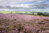 Heather Moorland and Yorkes Folly Near Pateley Bridge, Yorkshire, England, United Kingdom, Europe Photographic Print by Mark Sunderland