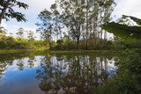 Pond, Andasibe-Mantadia National Park, Madagascar, Africa Photographic Print by G&M Therin-Weise