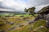 Lone Tree Above Crummack Dale, Yorkshire, England, United Kingdom, Europe Photographic Print by Mark Sunderland