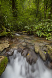 Waterfall, Semuc Champey, Guatemala, Central America Photographic Print by Colin Brynn
