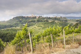Vineyards Near to San Gimignano, Tuscany, Italy, Europe Photographic Print by Copyright: Julian